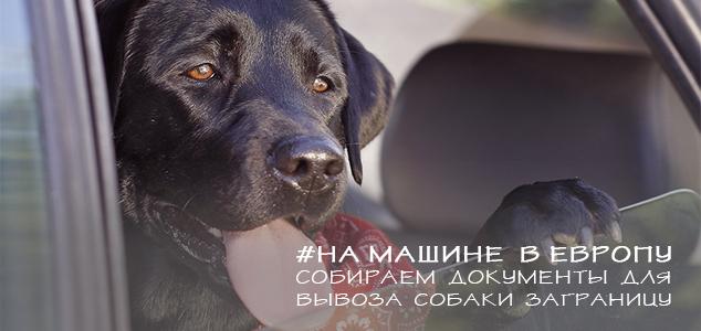 Список документов для поездки с собакой за границу