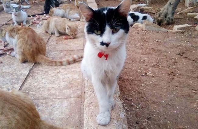 © Nobel Peace Prize to Alaa  Поначалу уАлы было двадцать кошек, ачерез год ихстало уже боль