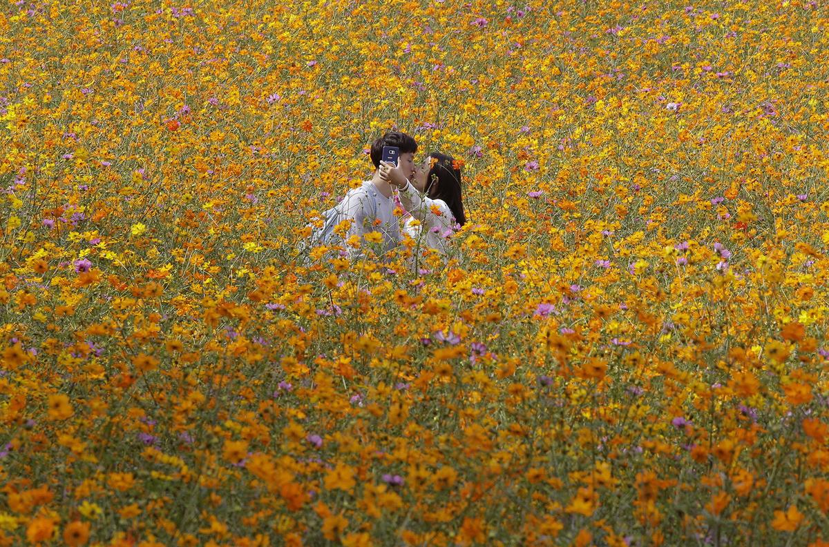 30. Пара фотографирует свой поцелуй посреди цветочного поля в Олимпийском парке Сеула, Южная Корея,