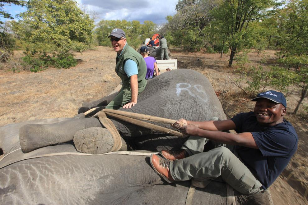 13. Необычная операция прошла 12 июля 2016 в Малави, Восточная Африка. (Фото Tsvangirayi Mukwaz