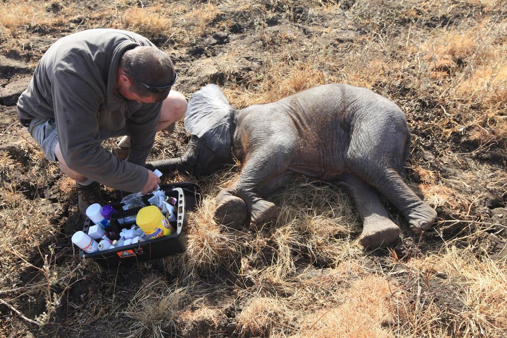 6. Еще один незаменимый механизм, особенно при перевозке крупных слонов — подъемный кран. (Фото