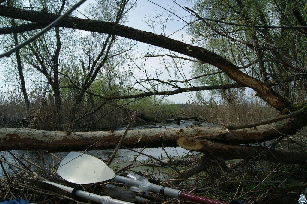 Упавшее дерево в русле Ворсклы