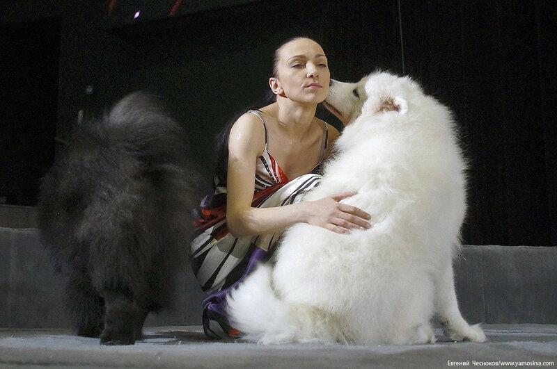 37. Дарья Костюк. собачки. 11.11.16.10..jpg