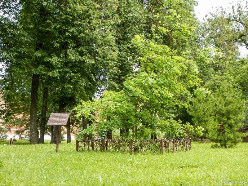 Дуб, посаженный в честь 200-летия войны 1812 года, Сквер Памяти Героев, Смоленск