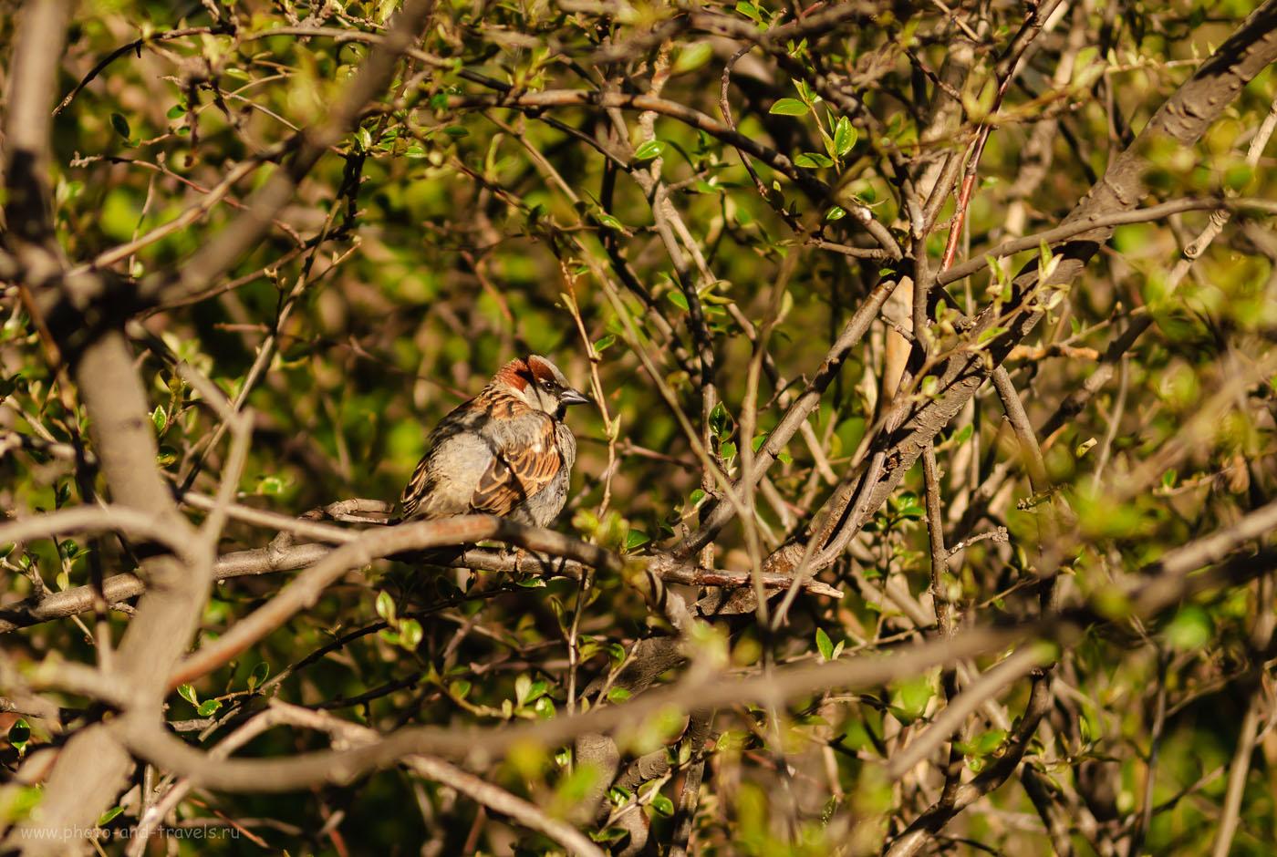 8. Пример фото на Nikon D200 и зум Nikon 17-55mm f/2.8 при съемке диких птиц. 1/750, 2.8, 100, 55.