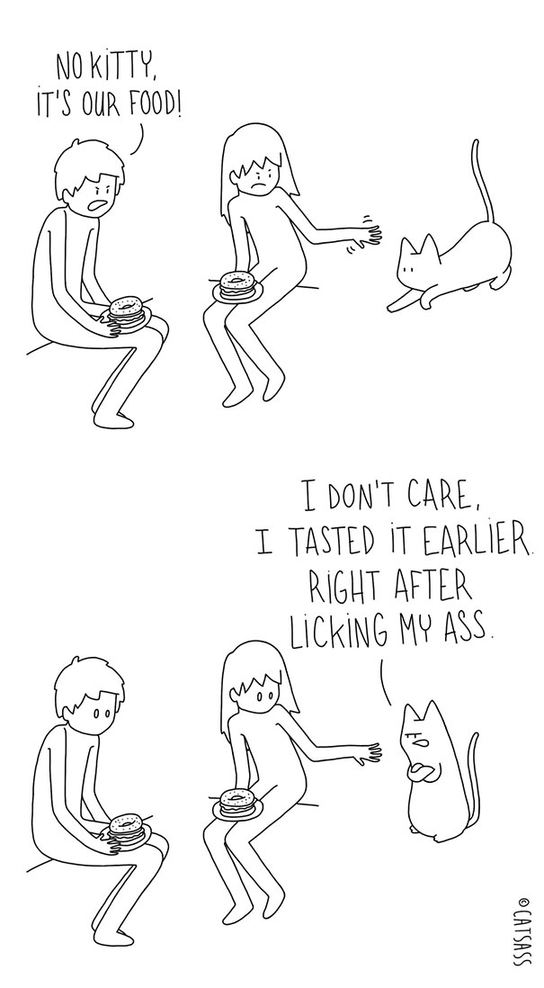 O que seu gato esta pensando