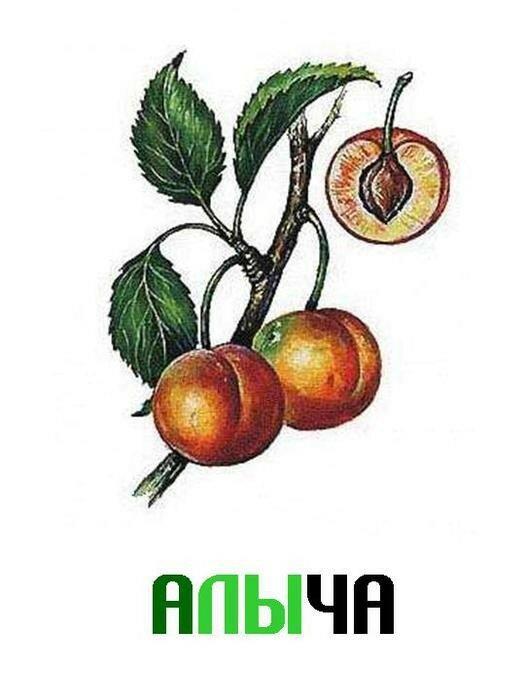 Фрукты - ягоды