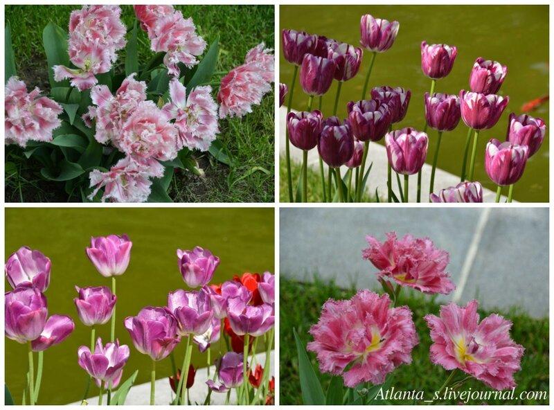 watermarked - тюльпаны 2.jpg