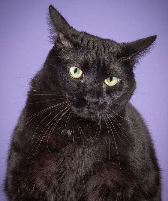 Коты фотографа Пита Торна