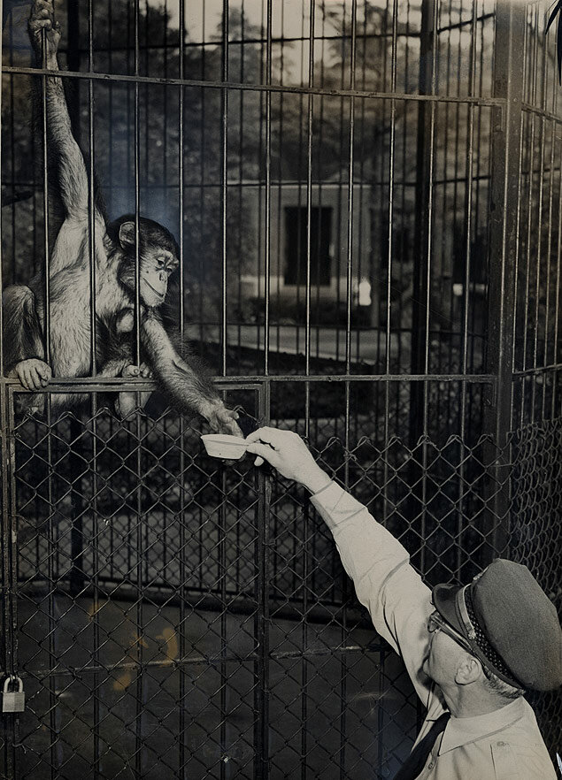 As a relief from the record high heat of the season, Mike the baboon gets his ration of ice cream from Central Park Zoo supervisor John Galm.