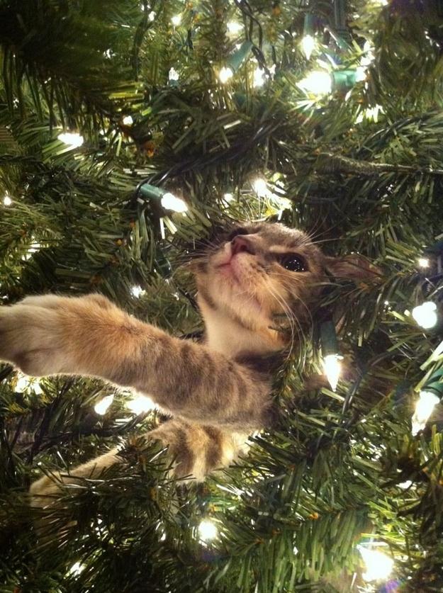 Коты на ёлке - фото 29