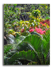 Сейшелы. Seychelles. Фото NigelSpiers - Depositphotos