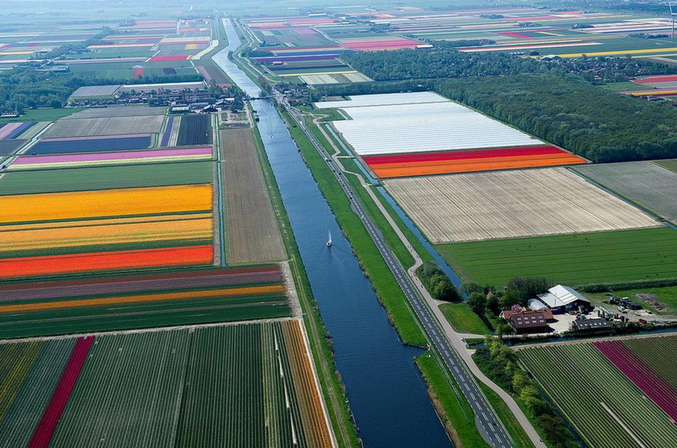 Над полями тюльпанов. 0_bcec4_ce3022c5_orig