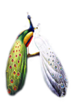 61788748_jcw_peacock_and_peahen.png