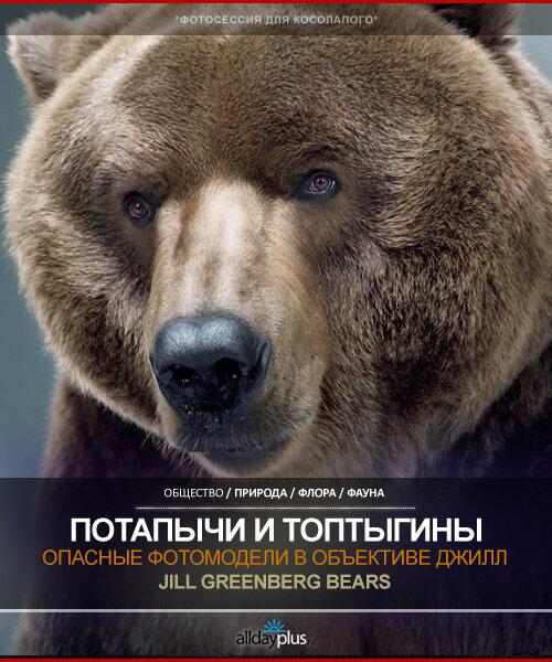 Опасные дикие фотомодели. Медведи в съемочном павильоне Джилл Гринберг.  56 мишек.