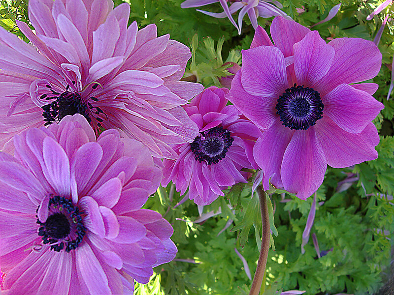 Летние цветы...