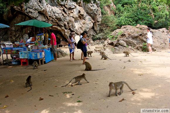 обезьяны в храме обезьян в краби
