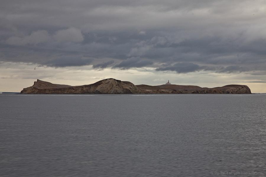 10. Пунта Аренас и фауна Магелланова пролива