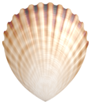 Flergs_By-The-Sea_Shell2.PNG