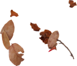 kimla_LS_leaves.png