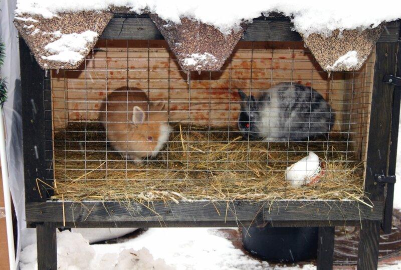 Клетка с кроликами на Крещатике