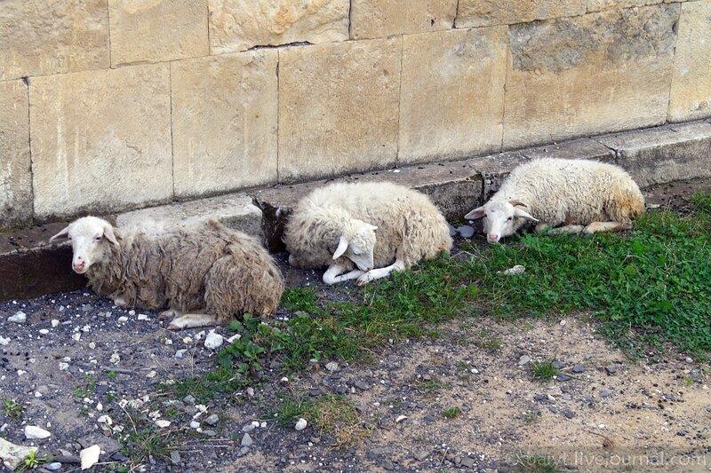 Овцы у стен церкви Баракони