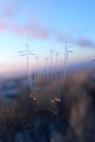 чудо на стекле -цветы