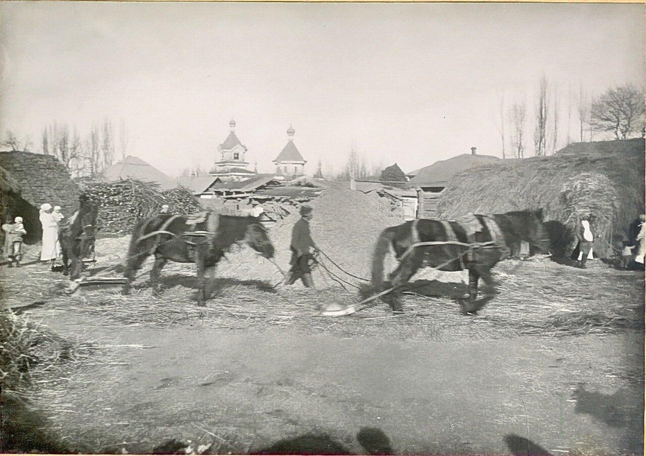Молотьба лошадьми с камнями в деревне. 1914