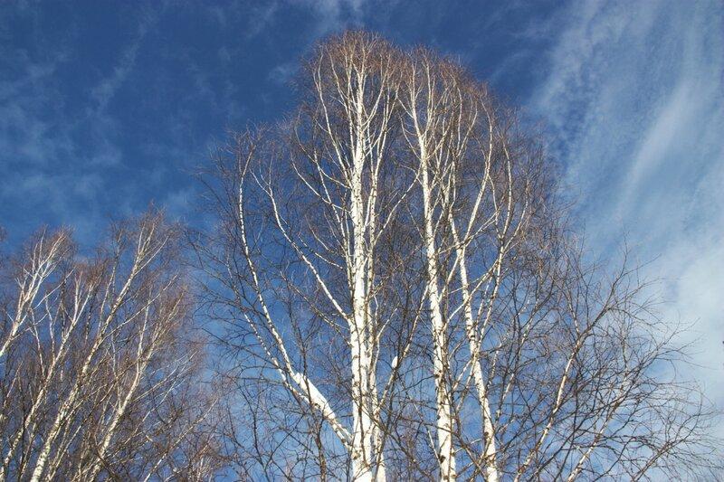 Весеннее небо, лес, оптимизм