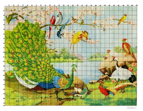 «Павлин и другие птицы, схема