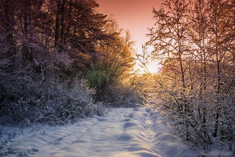 Зимний лес в объятьях тишины