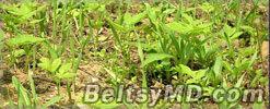 Молдавские граждане будут платить штрафы за сорняки