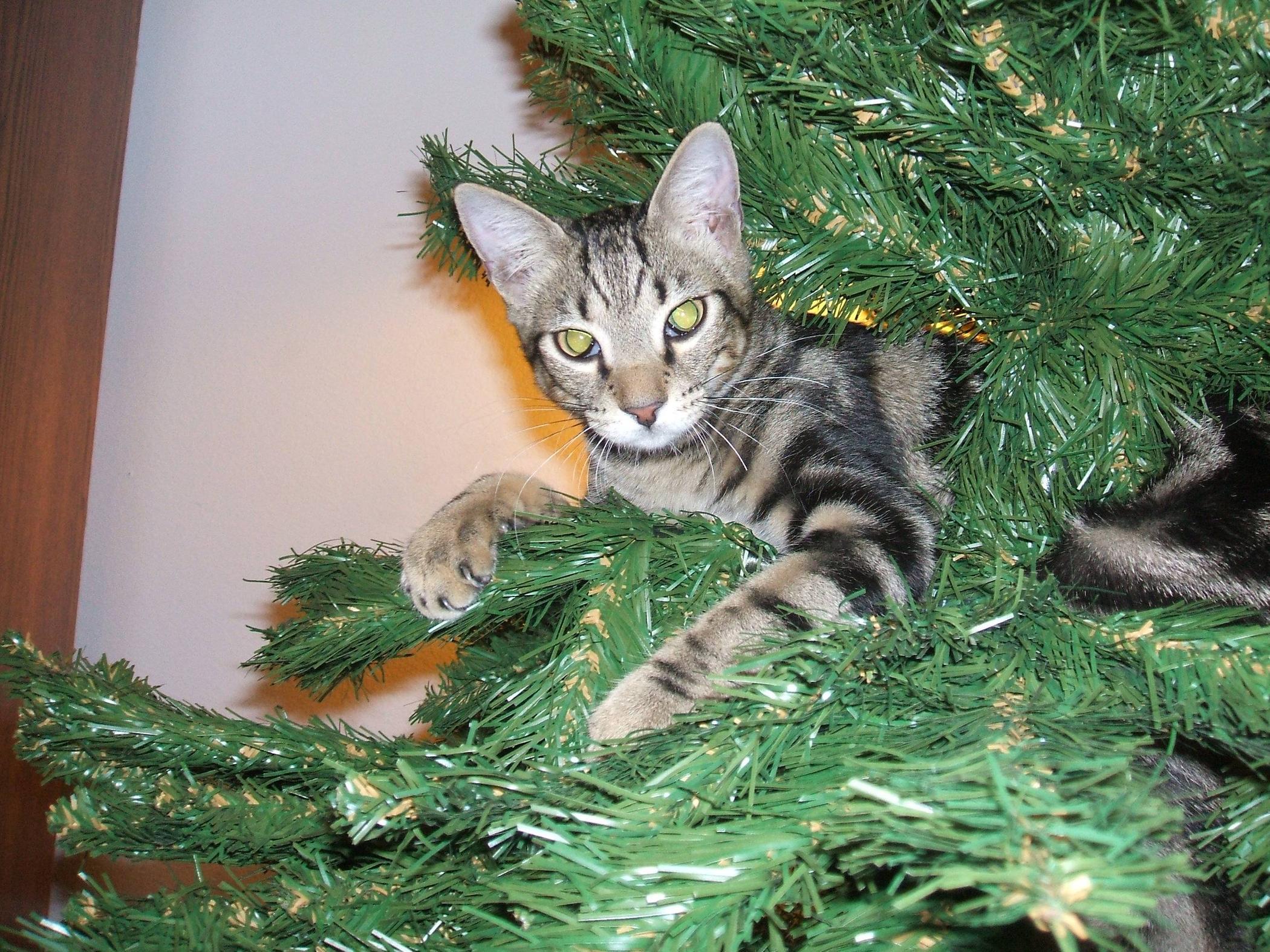 Коты на ёлке - фото 28