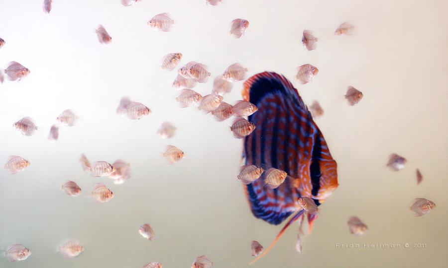 Подводный мир by Frida Hellman