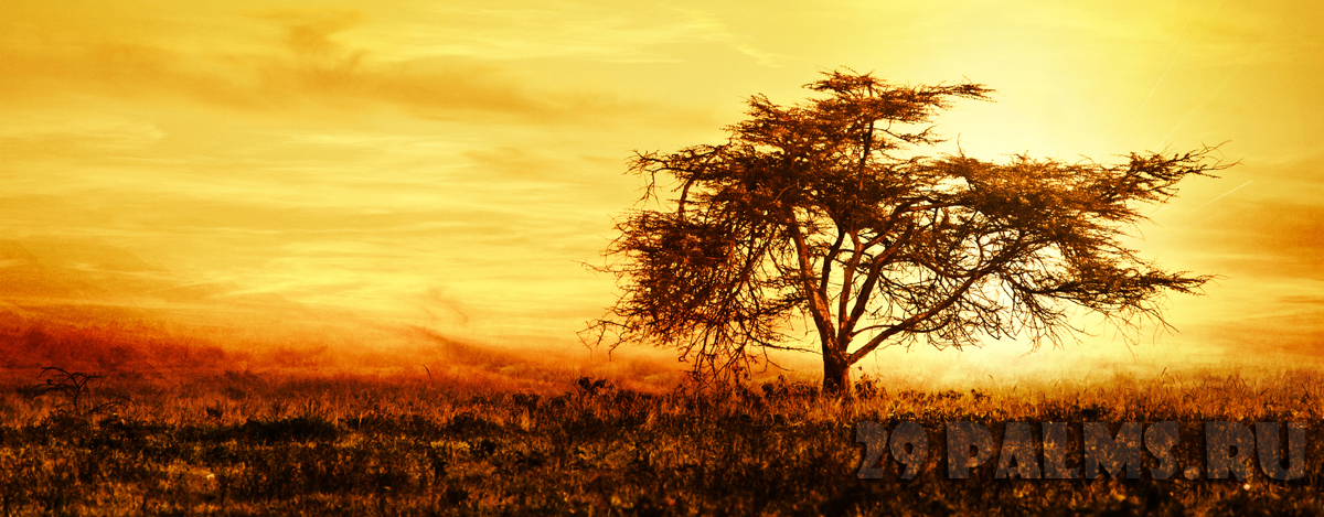 Кения. Масаи Мара. African tree silhouette over sunset, single tree on the field,AnnaOmelchenko - Depositphotosl