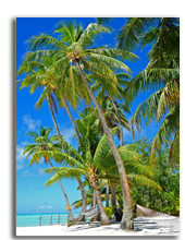 Сейшелы. Seychelles. Фото wilar - shutterstock