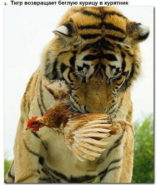Трогательное фото животного мира (10 фото)