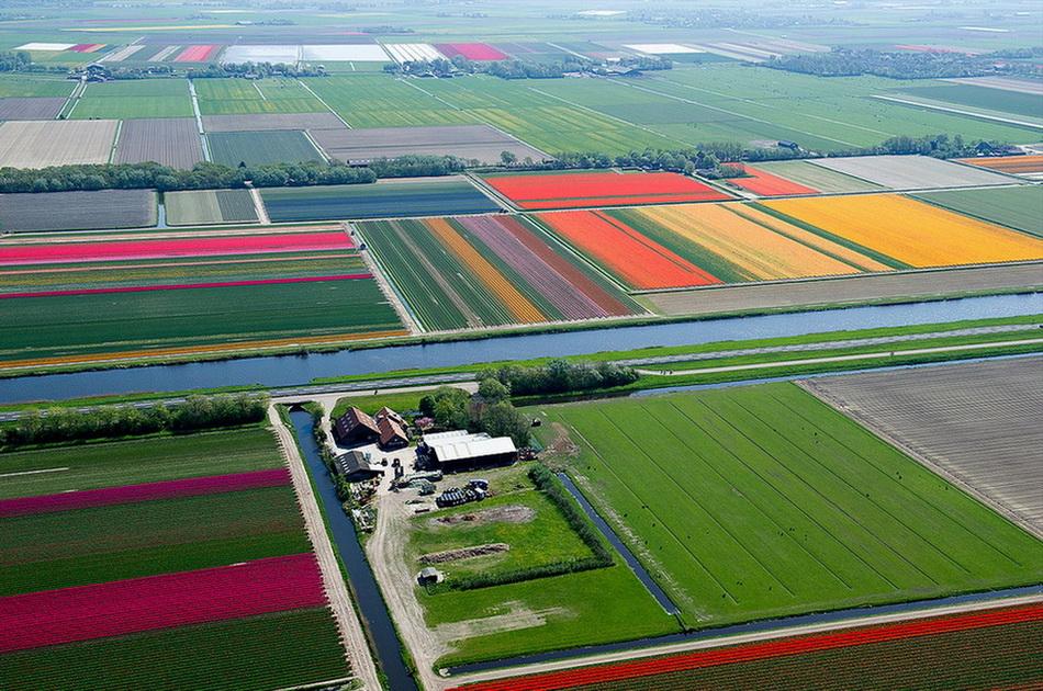 Над полями тюльпанов. 0_bceb4_2b2c4380_orig