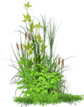 forest chats (10).png