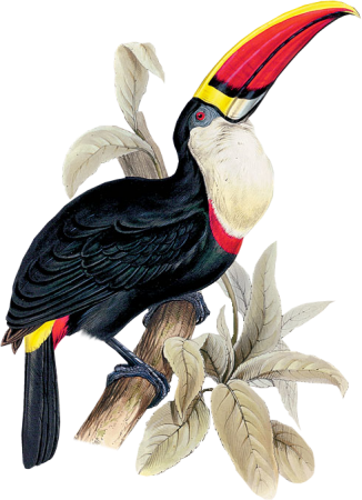 Bird32(toucan)_dhedey.png