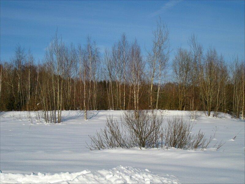 Деревца около левад в Славино