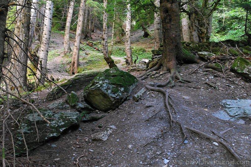 Горный лес в Верхней Раче (Уцера)