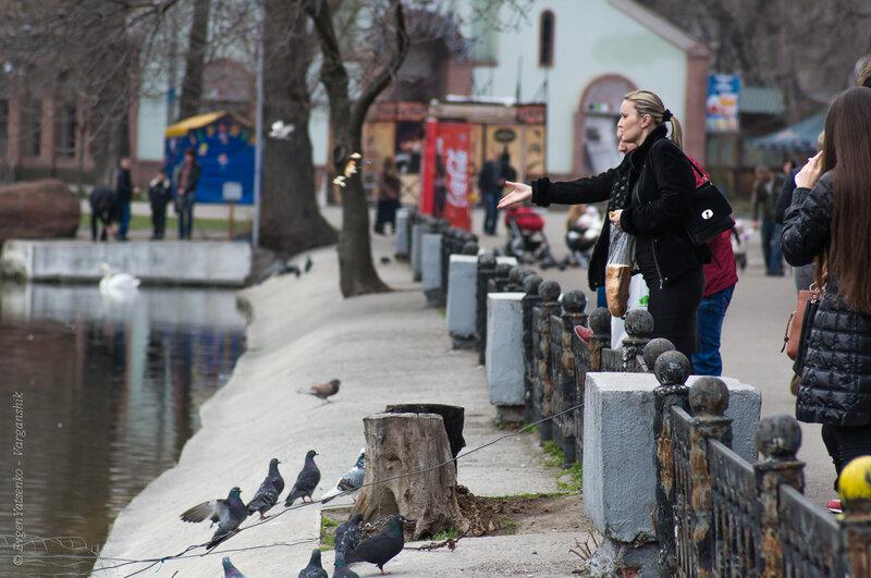 Подкармливание лебедей и голубей
