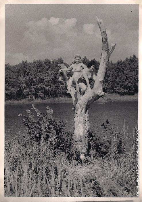 две женщины в купальниках залезли на дерево фотография 1965 года