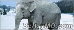 Слонов напоили 2 ящиками водки, чтобы спасти от переохлаждения