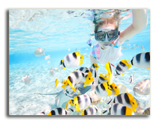 Французская Полинезия. Woman snorkeling in clear tropical waters among colorful fish Фото BlueOrange Studio - shutterstock