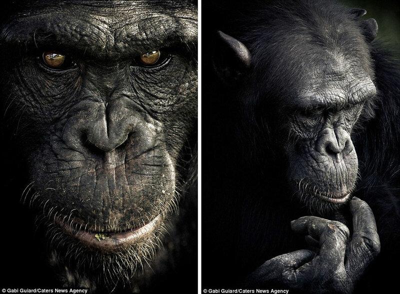 Эмоции обезьян, совсем как у людей. Фото-доказательство от Gabi Guiard / Габи Гиар / 12 фото