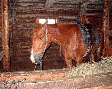 Американец изнасиловал лошадь