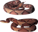 змеи  (6).png