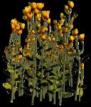Lug_Grass_Flower (29).png